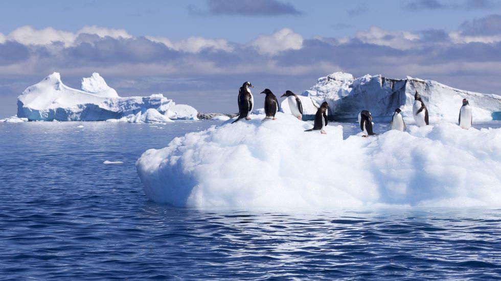 Croisières Cap Horn et Antarctique