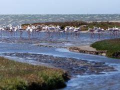 Crociere Walvis Bay
