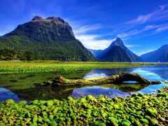 Crociere Milford Sound