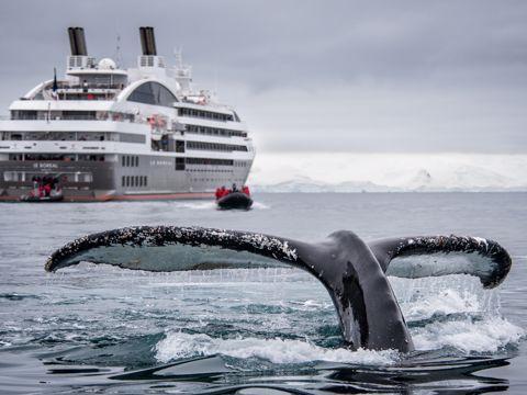 Croisière Ponant Antarctique