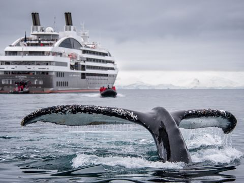 Crucero Ponant Ártico